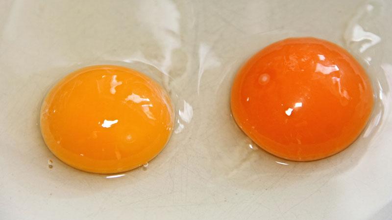 chăm sóc tóc khô bằng trứng gà